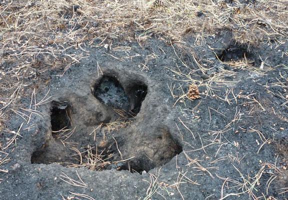 http://rivercrossinginc.tripod.com/firepictures/ashpits.jpg