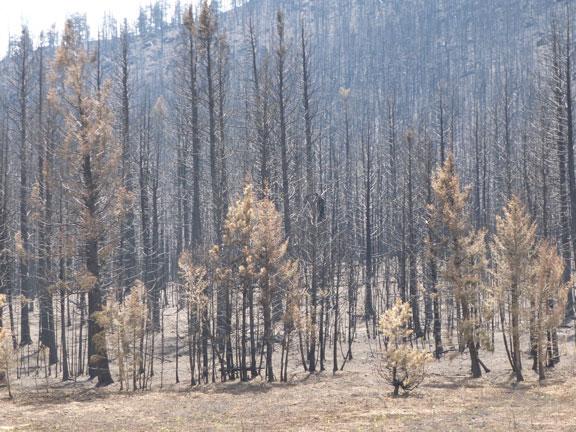 https://rivercrossinginc.tripod.com/firepictures/burnttrees.jpg