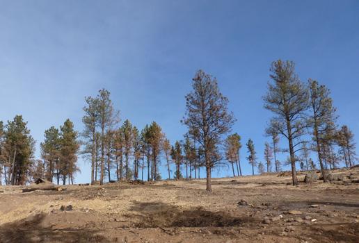 https://rivercrossinginc.tripod.com/firepictures/emptytrees.jpg