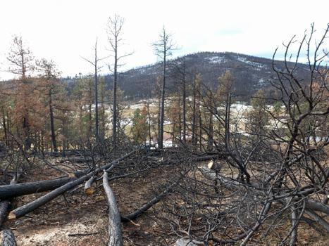 https://rivercrossinginc.tripod.com/firepictures/treescut.jpg